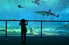 Baie de requin dans l'Australie de la Gold Coast Queensland du monde de mer photographie stock libre de droits