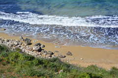 Baie de Selmun (baie d'iebaħ de ¡ d'ImÄ) Photos stock