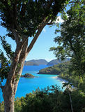 Baie de tronc en St John Photo stock