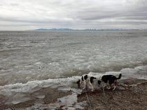 Baie glaciale de montagne avec des chiens Image libre de droits