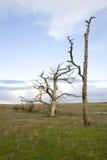 Baie morte de Porlock d'arbres image stock
