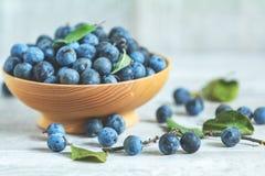 Baies bleues de prunellier de récolte d'automne sur un fond en bois clair de table Copiez l'espace Remède normal photos libres de droits