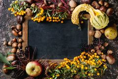 Baies d'automne avec le tableau Photo stock
