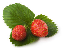 Baies d'une fraise Photographie stock libre de droits