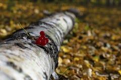 Baies dans la forêt d'automne photographie stock libre de droits
