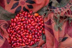 Baies de cynorrhodon sur la couleur de terre cuite de tissu Photo libre de droits