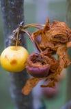 Baies de décomposition dans l'automne Images stock