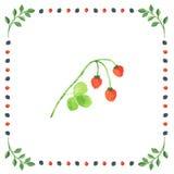 Baies de fraisier commun sur un fond blanc encadré dans la baie Photos stock