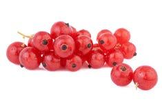 Baies de groseille rouge d'isolement sur le blanc Photographie stock