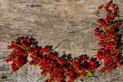 Baies de groseille rouge sur le fond en bois rustique Photographie stock