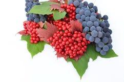 baies de Guelder-rose avec des raisins sur un fond blanc Image stock