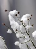 Baies de l'hiver image libre de droits