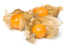 Baies de Physalis Photos libres de droits