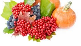 Baies de potiron et de guelder-rose avec des raisins Photographie stock