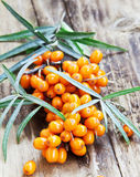Baies de Seabuckthorn Images libres de droits