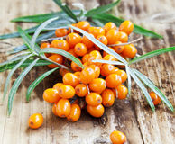 Baies de Seabuckthorn Photographie stock