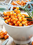 Baies de Seabuckthorn Image stock