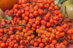 Baies de sorbe mûres rouges Image stock