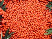 Baies de sorbe oranges heureuses photographie stock libre de droits