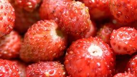 Baies des fraises banque de vidéos