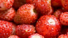 Baies des fraises clips vidéos