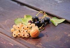 Baies des groseilles et de la groseille à maquereau Photo stock