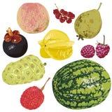 Baies et fruits illustration stock