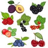 Baies et illustration sauvages réglées de vecteur de fruit illustration libre de droits