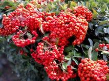fleurs d 39 oignon sur le fond rouge image stock image du fond oignon 65414357. Black Bedroom Furniture Sets. Home Design Ideas