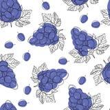 Baies mûres bleues de raisin, modèle sans couture de vecteur d'isolement sur le fond blanc illustration stock