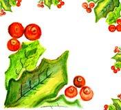 Baies mûres de viburnum avec des feuilles Illustration Stock