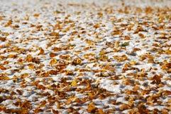 Baies rouges à l'hiver image stock