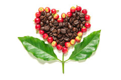 Baies rouges de grains de café et café rôti dans la forme de coeur Photographie stock libre de droits