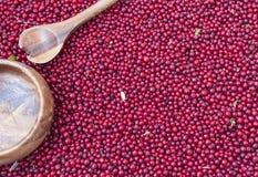 Baies rouges de myrtille Photo stock