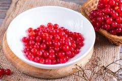 Baies rouges mûres de viburnum dans une cuvette sur la table Image stock
