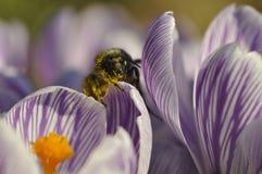 Baigné dans le pollen Photos stock
