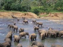 Baigner des éléphants Image libre de droits