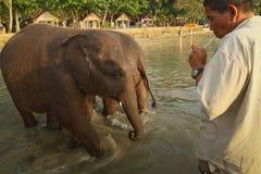 Baigner des éléphants en mer sur l'île de Ko Cang Image libre de droits