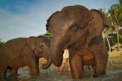 Baigner des éléphants en mer sur l'île de Ko Cang Images stock