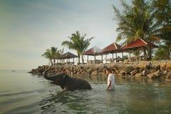 Baigner des éléphants dans le Golfe du Siam Photo stock