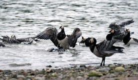 Baigner des oiseaux Photos stock