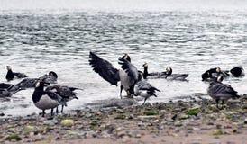 Baigner des oiseaux Photo libre de droits