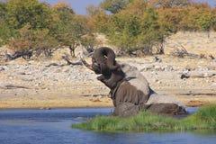 Baigner l'éléphant Photographie stock libre de droits