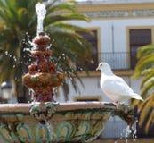 Baigner la colombe Photographie stock