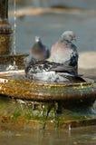 baignez la fontaine image stock