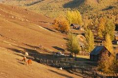 Baihaba Village. Baihaba is the most north-western village of China, bordering Kazakhstan Royalty Free Stock Photography