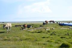 Baikal湖自然 免版税库存照片
