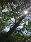 baikal ανασκόπησης δέντρο λιμνών σημύδων στοκ φωτογραφίες