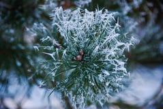 baikal ανασκόπησης δέντρο πεύκων λιμνών Στοκ Εικόνα
