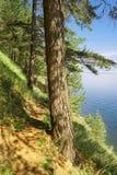 Baikal dziki ślad Obrazy Royalty Free